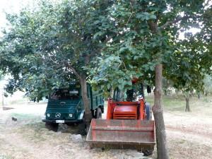 În grădină la Prodromu. Pomii din imagine se numesc lutuşi; fructele lor dulci se coc toamna şi par o combinaţie între mere şi piersici